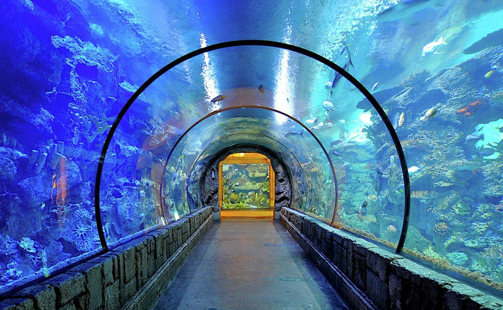 What Things to Do in Las Vegas With Kids? Here's the List!